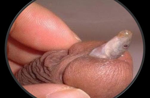 Pene Metiendo A La Vagina 7