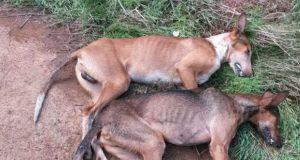 perro-envenenado